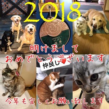 20180114-122412.jpg